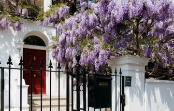 Front door with wisteria exterior